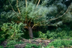 Erdő-szél