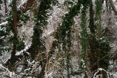 ...hó-fák-borostyán...