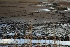 Kiszáradó tavak (Petesmalom)